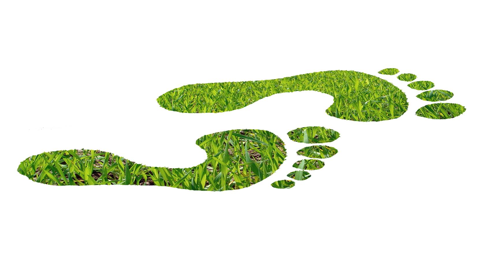 audit-green-feet2