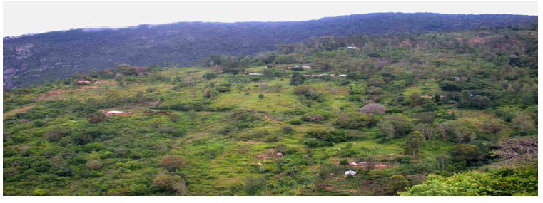 shimba forest - 2