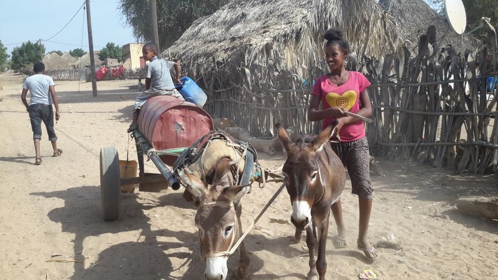 Eritrea Donkey 2 2019