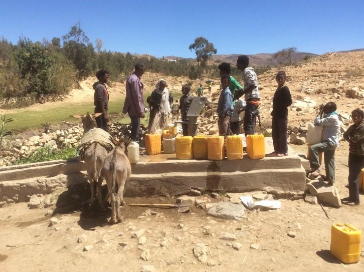 Eritrea Donkey 4 2019
